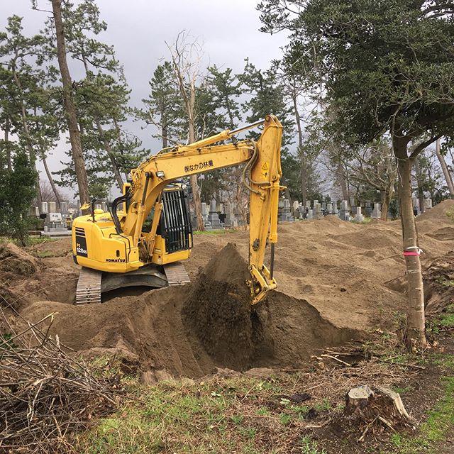 海岸林の整地作業🛠この後に松を植林します🌲#伐採#特殊伐採#林業#除草#整地#植林#松林#石川県#白山市#鶴来#なかの林業