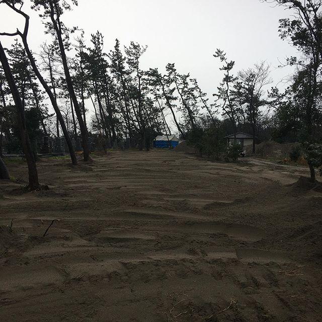 荒れ果てた海岸林を健全な松林に変えます#伐採#特殊伐採#林業#松林#荒地#整地#松植林#石川県#白山市#鶴来#なかの林業