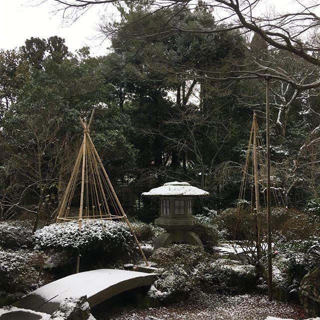 やっと冬らしくなりました。#伐採#特殊伐採#林業#冬#除雪#石川県#白山市#鶴来#なかの林業