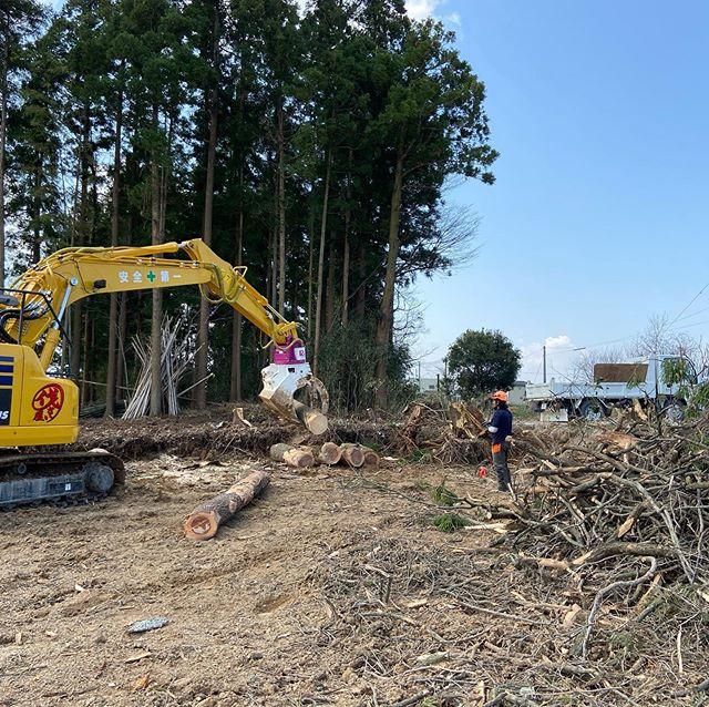 いい天気️仕事がはかどります#伐採#特殊伐採#林業#石川県白山市#鶴来#なかの林業