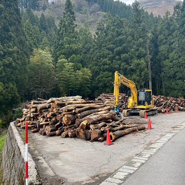 来週から運搬#伐採#特殊伐採#林業#ベニヤ#バイオマス#原木トレーラー#石川県#白山市#鶴来#なかの林業
