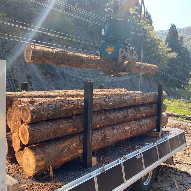 積込運搬5車目🚛#伐採#特殊伐採#林業#経営#積込#運搬#石川県#白山市#鶴来#なかの林業