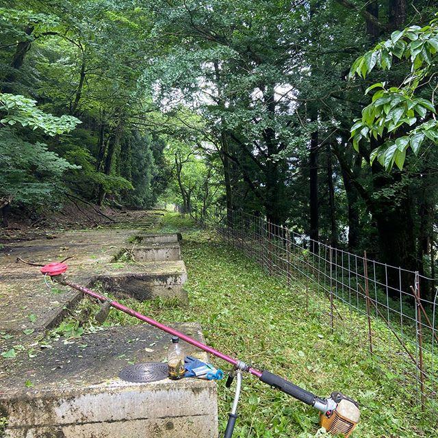 某用水の巡視路除草️#伐採#特殊伐採#林業#除草#石川県#白山市#鶴来#なかの林業