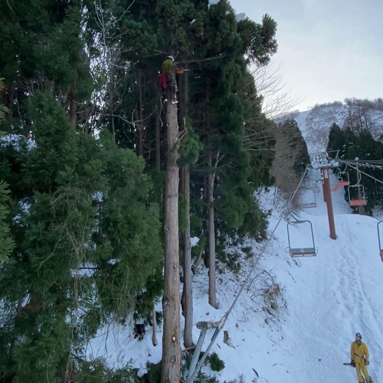 某スキー場のリフトに雪の乗った枝が折れると危険との事でスギの枝打ち・芯切り️#伐採#特殊伐採#林業#枝打ち#芯切り#スキー場#石川県#白山市#鶴来#なかの林業