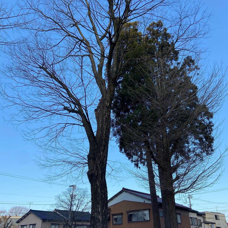 いい天気の中️の仕事ははかどりますね😀#伐採#特殊伐採#林業#石川県#白山市#鶴来#なかの林業