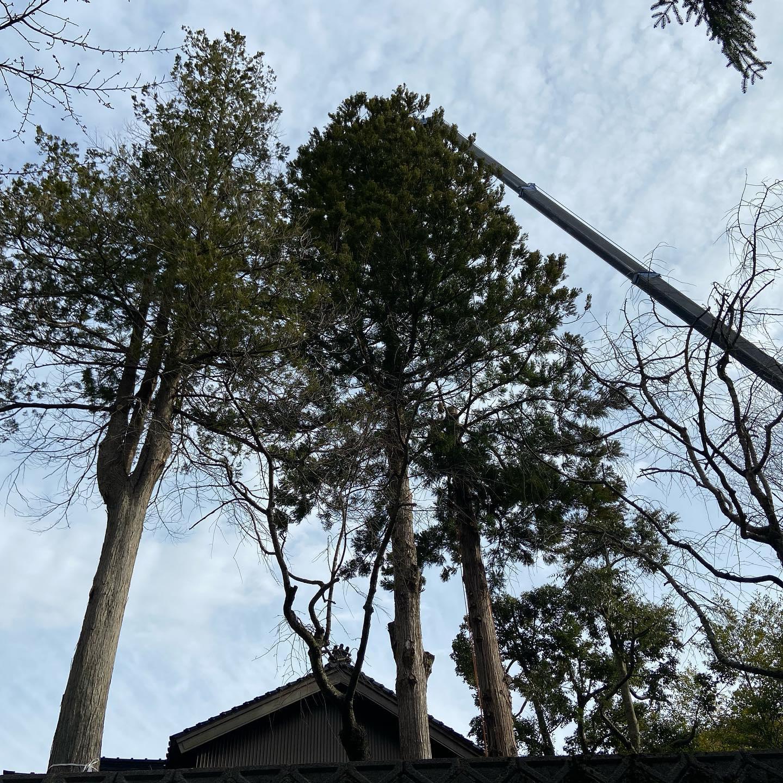 本日は某神社で伐採です。3月は特伐のオンパレードです!#伐採#特殊伐採#林業#石川県#白山市#鶴来#なかの林業