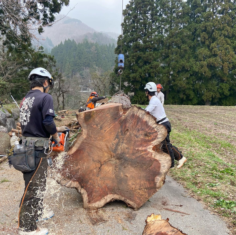 本日の伐採️#伐採#特殊伐採#林業#石川県#白山市#鶴来#なかの林業