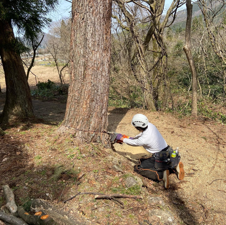 本日の伐採風景️#伐採#特殊伐採#林業#石川県#白山市#鶴来#なかの林業