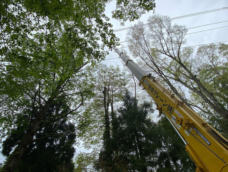 本日の作業風景#伐採#特殊伐採#林業#破砕機#チッパーシュレッダー#石川県#白山市#鶴来#なかの林業