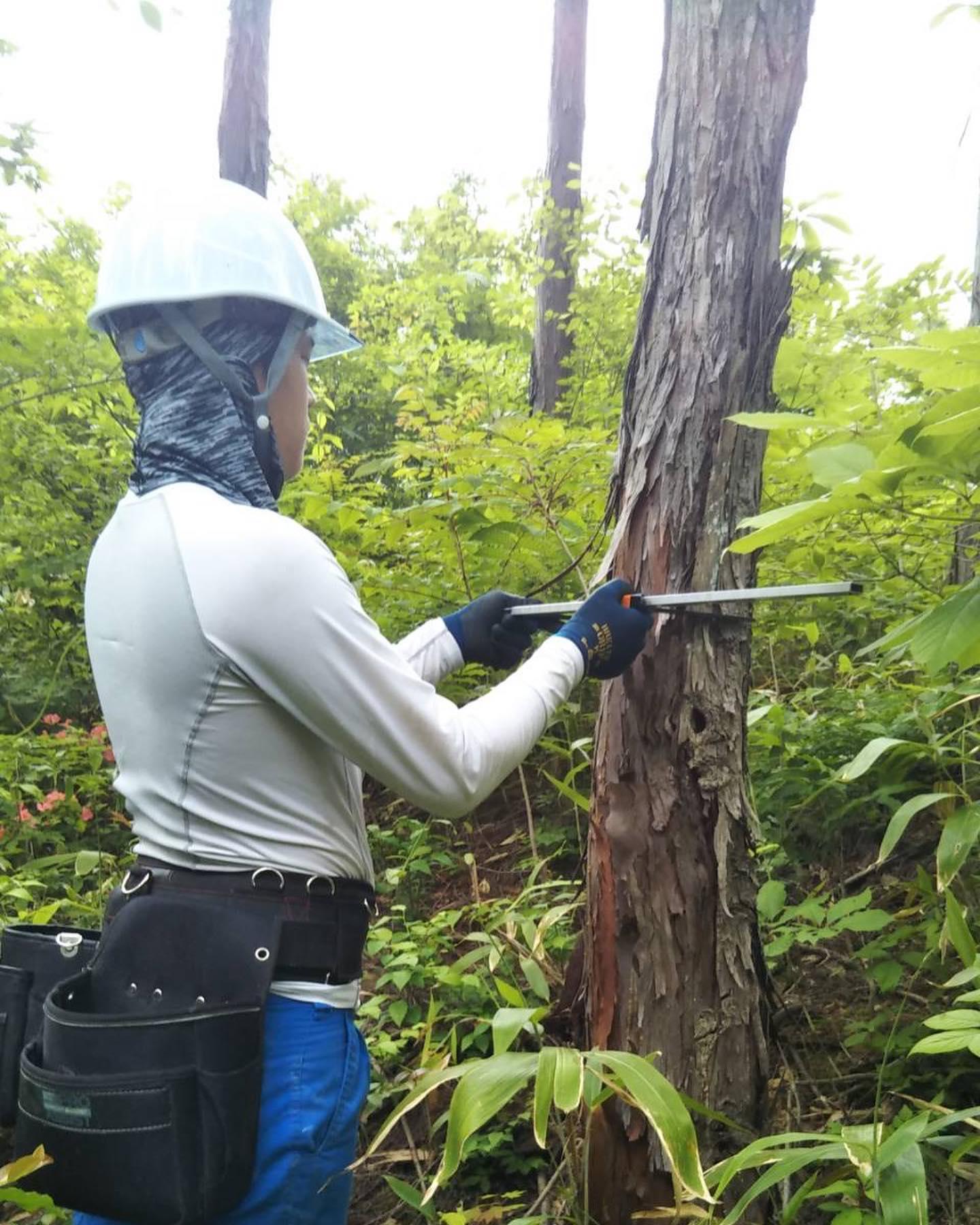 4月から行っている支障木精密調査!いよいよ終盤です。#伐採#特殊伐採#林業#測量#支障木精密調査#石川県#白山市#鶴来#なかの林業