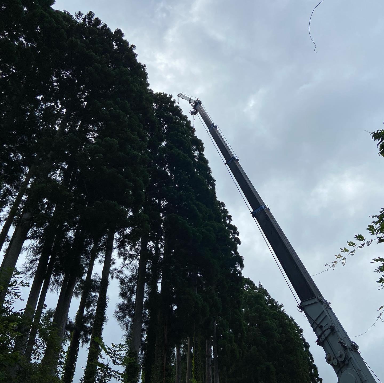 本日も特伐作業️空師ってやつです笑安全第一で伐ってます♪#伐採#特殊伐採#林業#空師#石川県#白山市#鶴来#なかの林業