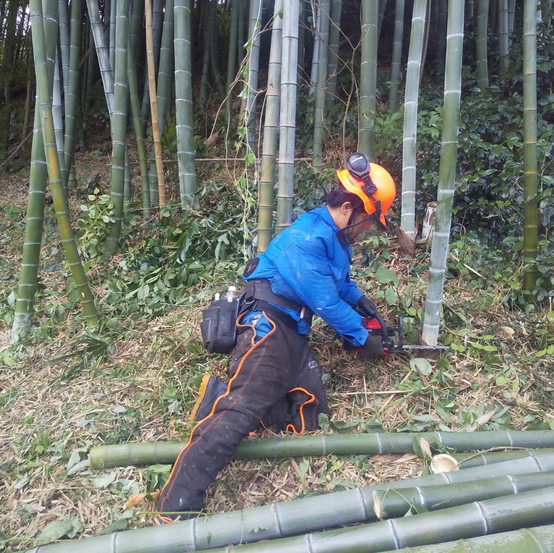 只今行っている竹林整備の現場。暑いです#伐採#特殊伐採#林業#竹林#整備#石川県#白山市#鶴来#なかの林業