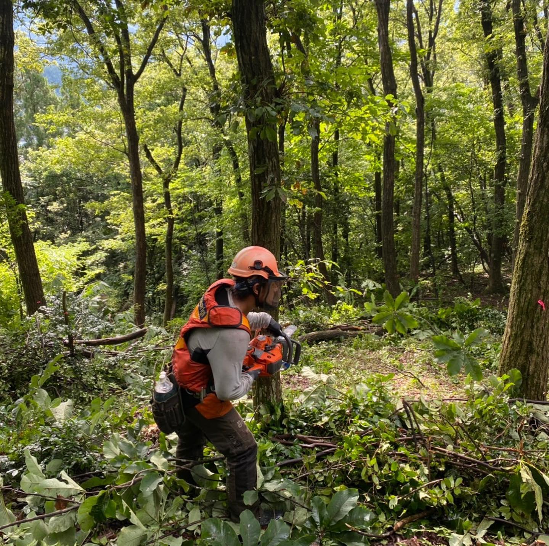 線下保安伐採工事雨降ったり晴れたりの天候ですので安全第一で作業行ってます#伐採#特殊伐採#林業#線下伐採#石川県#白山市#鶴来#なかの林業