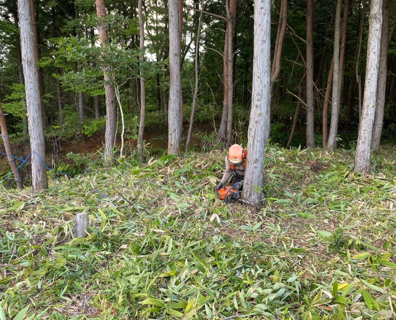 穴水町の方での線下伐採!今週で仕上げます!#伐採#特殊伐採#林業#送電線#保安伐採#石川県#白山市#鶴来#なかの林業