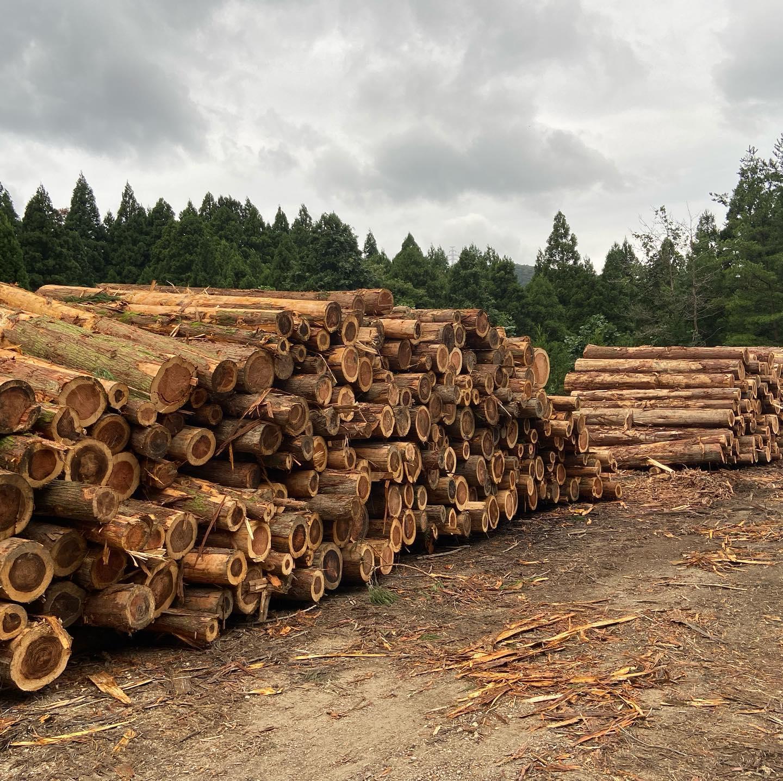 自社土場(白山BASE)が丸太で埋まりました#伐採#特殊伐採#林業#土場#丸太#搬出#石川県#白山市#鶴来#なかの林業
